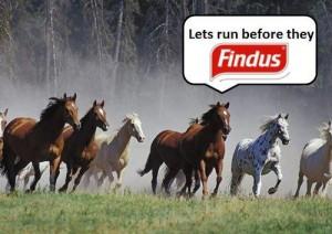 Bad buzz Findus